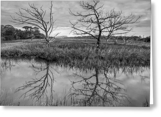 Salty Marsh At Jekyll Island In Black And White Greeting Card by Debra and Dave Vanderlaan