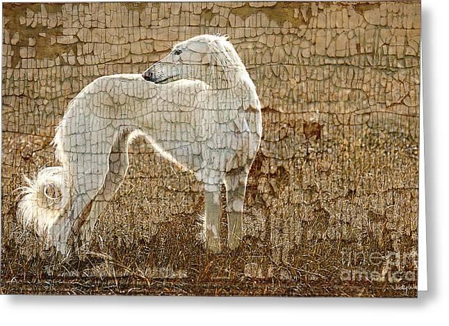 Saluki Texture Greeting Card by Judy Wood