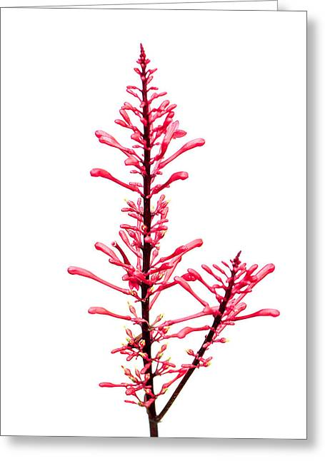 Salvia Red And Tall Greeting Card