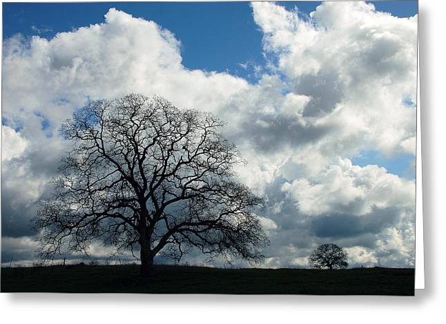 Same Tree Many Skies 13 Greeting Card
