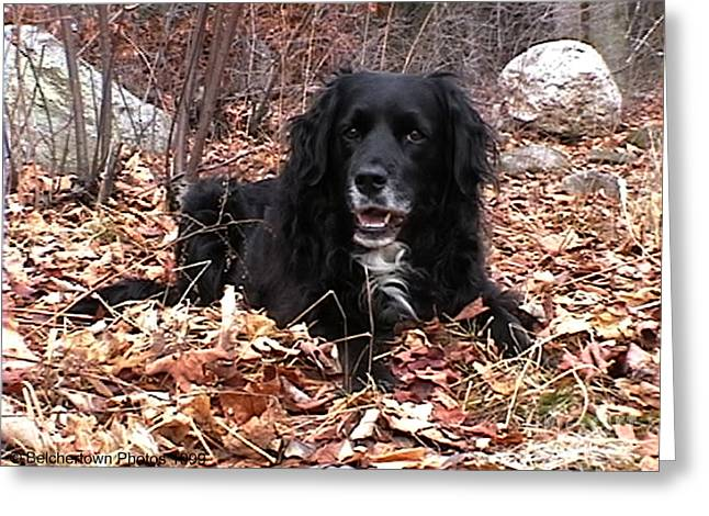 Sammi Smiling In Leaves Greeting Card