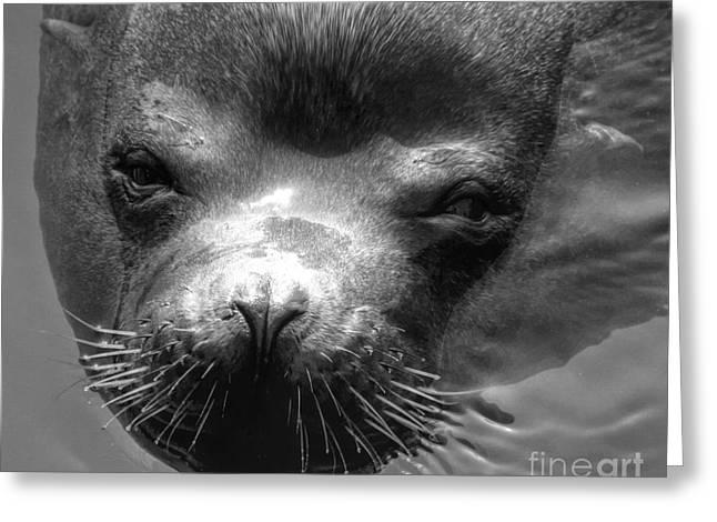 Sammy Sea Lion Greeting Card