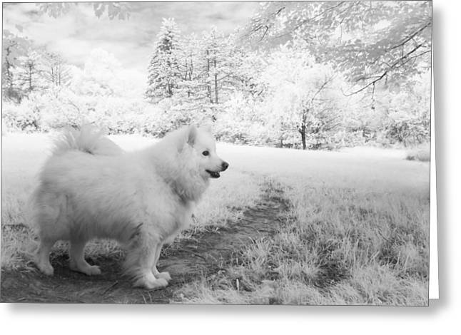 Samoyed In Ir Greeting Card by Eric Peterson