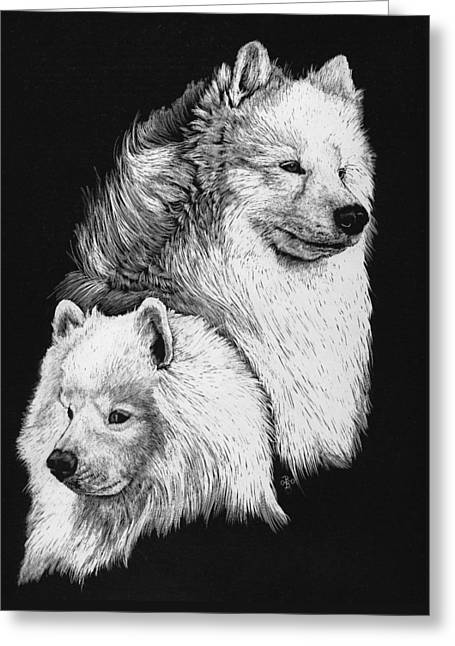 Greeting Card featuring the drawing Samoyed by Rachel Hames