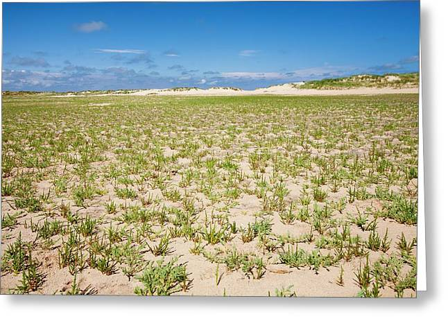 Samphire Growing On The Beach Greeting Card by Ashley Cooper