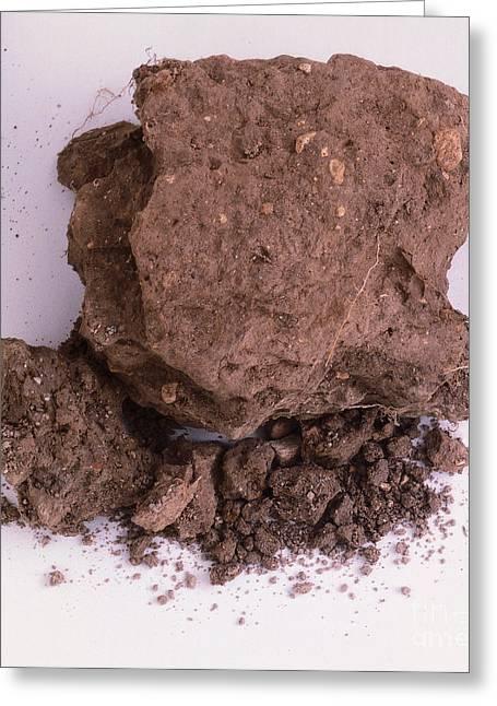 Sample Of Chalk Soil Greeting Card by Dorling Kindersley