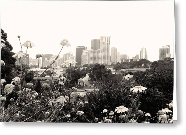 San Diego Cityscape  Greeting Card by William  Dorsett