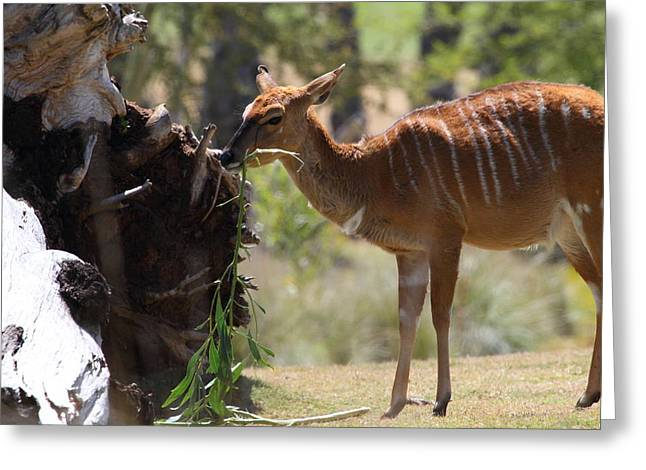 San Diego Zoo - 1212152 Greeting Card by DC Photographer