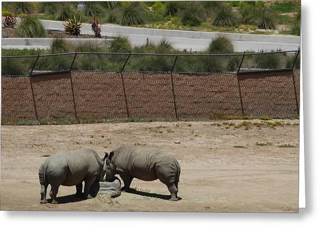 San Diego Zoo - 1212284 Greeting Card