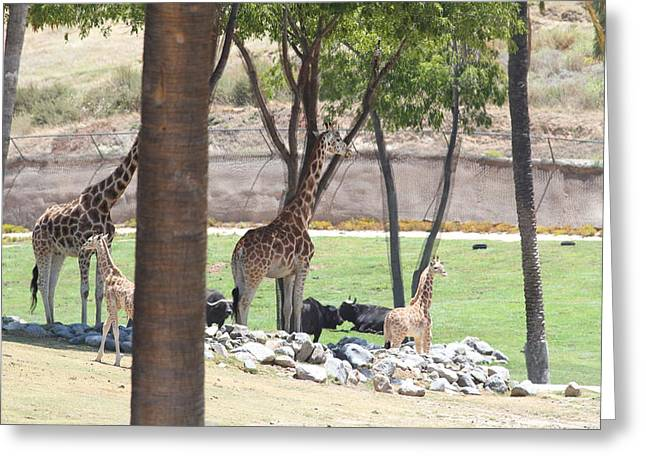 San Diego Zoo - 1212296 Greeting Card by DC Photographer