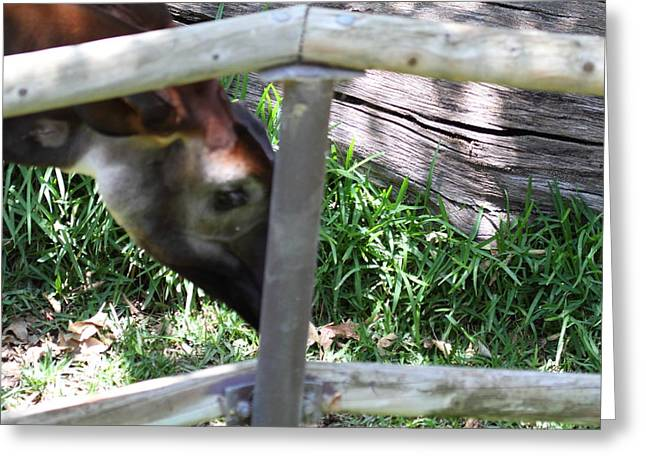 San Diego Zoo - 1212331 Greeting Card by DC Photographer