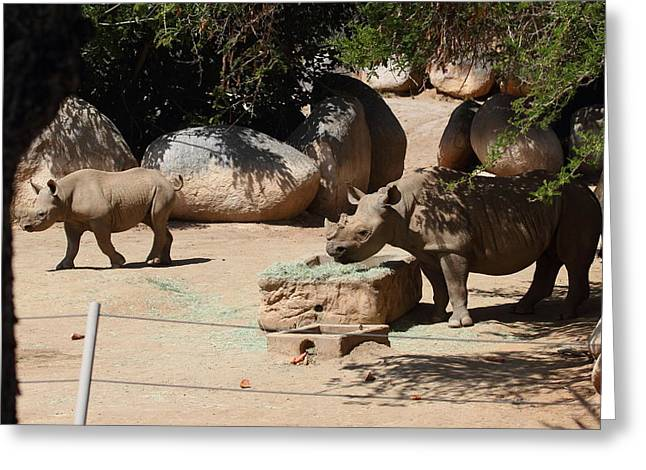 San Diego Zoo - 121235 Greeting Card by DC Photographer