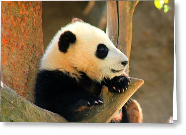 San Diego Zoo Panda Bear Xiao Liwu Greeting Card