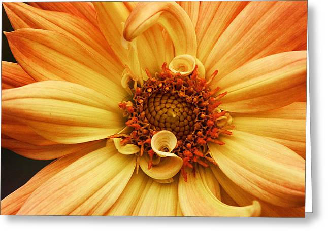 San Francisco Flower Greeting Card