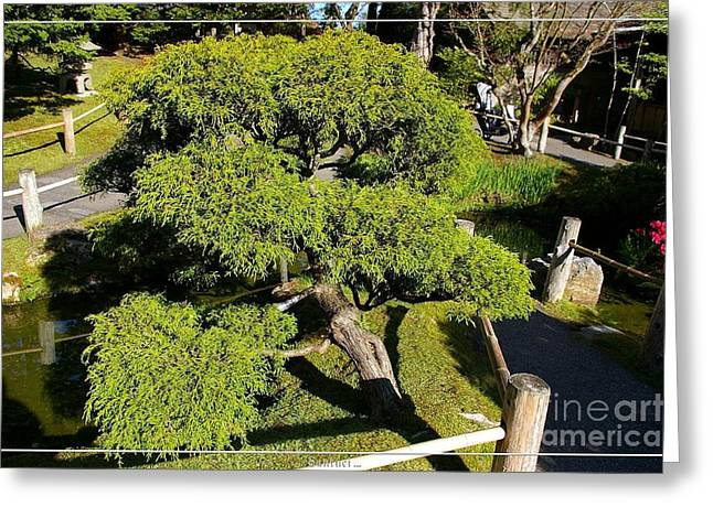 San Francisco Golden Gate Park Japanese Tea Garden 3 Greeting Card by Robert Santuci