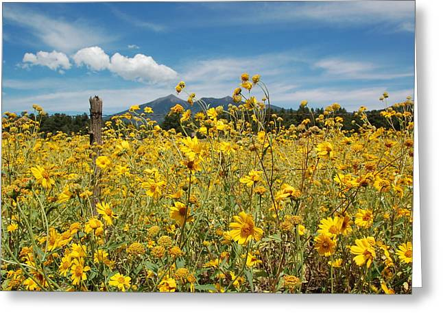 San Francisco Peaks Greeting Card by Kelly Wade