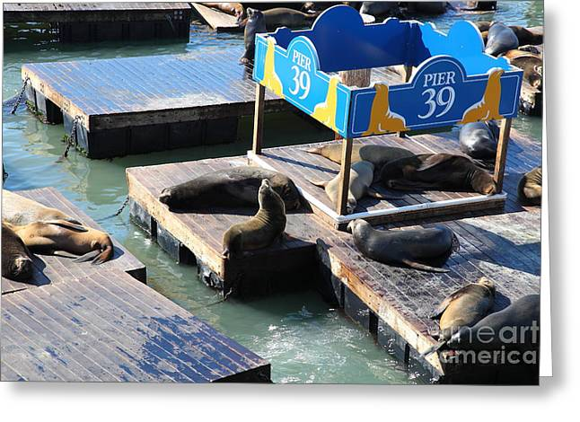 San Francisco Pier 39 Sea Lions 5d26105 Greeting Card by Wingsdomain Art and Photography