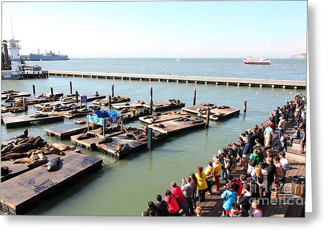 San Francisco Pier 39 Sea Lions 5d26109 Greeting Card