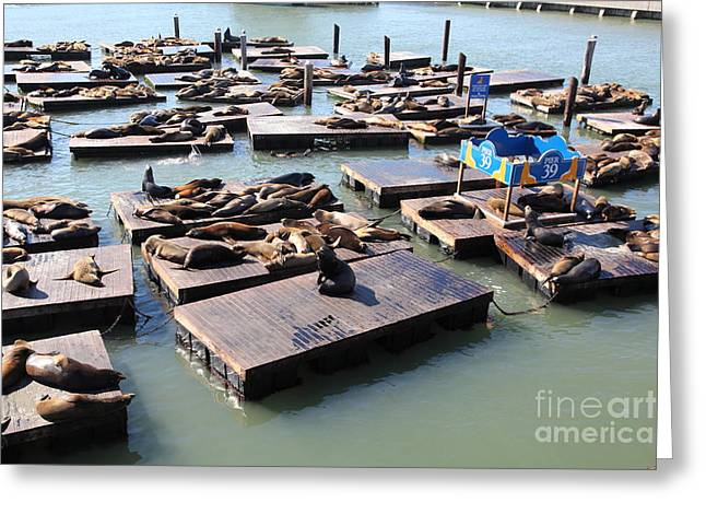 San Francisco Pier 39 Sea Lions 5d26115 Greeting Card
