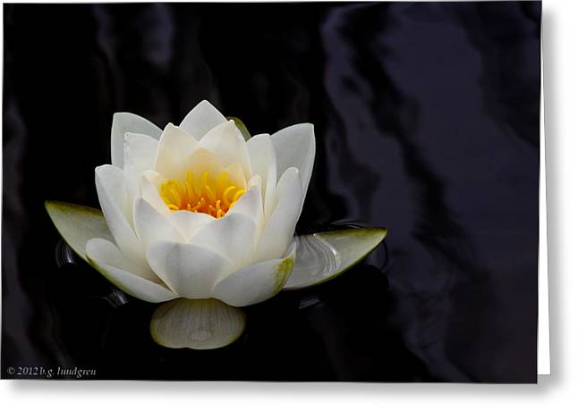 San Francisco Water Lily Greeting Card by Bruce Lundgren