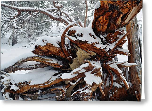 Greeting Card featuring the photograph San Jacinto Fallen Tree by Kyle Hanson