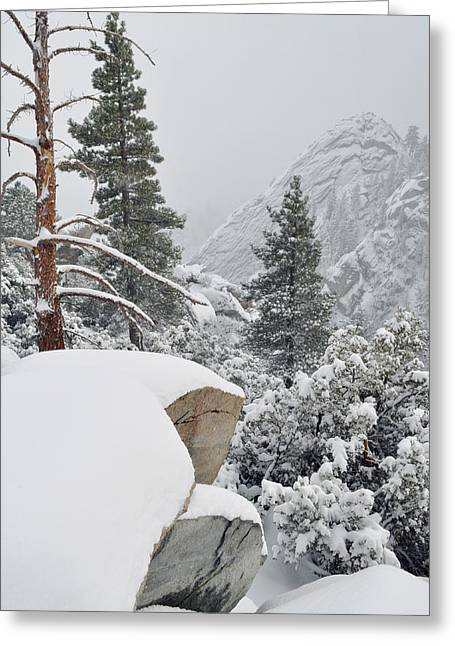 Greeting Card featuring the photograph San Jacinto Winter Wilderness by Kyle Hanson