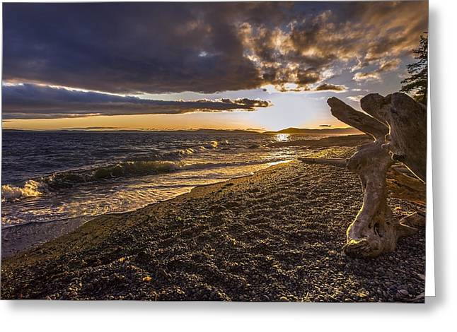 San Juans Majestic Driftwood Greeting Card by Mike Reid