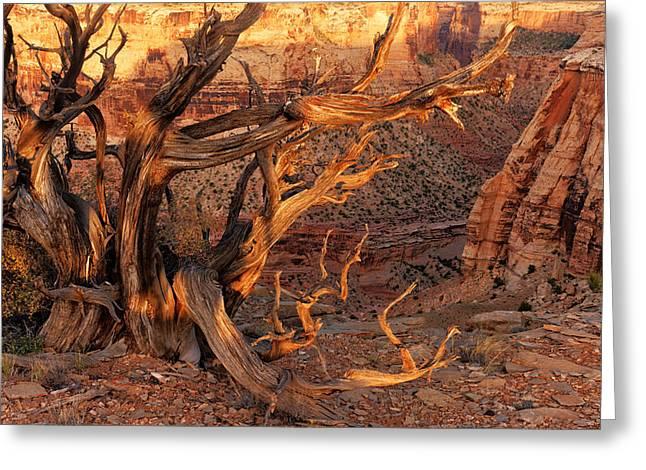 San Rafael Canyon Greeting Card