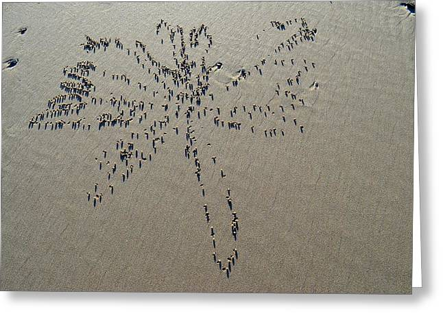 Natures Art - Dragonfly Sand Pattern Greeting Card