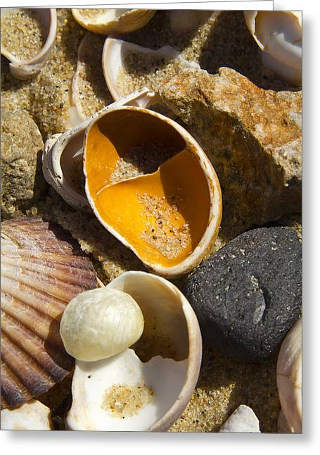 Sand Covered Shells Greeting Card by Eugene Bergeron