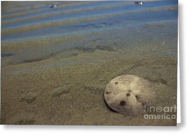 Sand Dollar Findings Greeting Card by Amazing Jules
