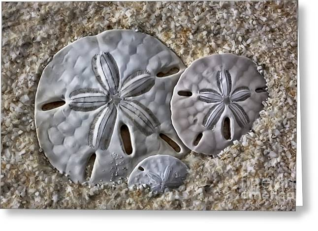 Sand Dollars 2106 Greeting Card