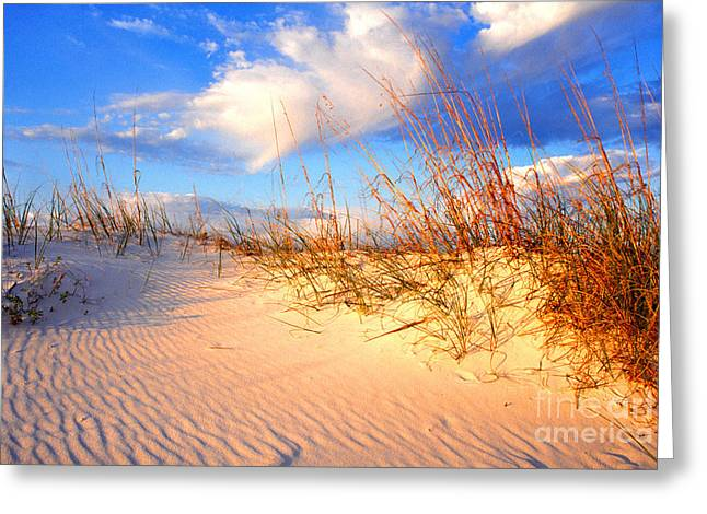 Sand Dune And Sea Oats At Sunset Greeting Card by Thomas R Fletcher