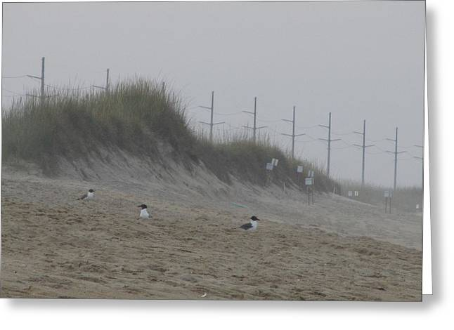 Greeting Card featuring the photograph Sand Dunes And Seagulls by Cathy Lindsey