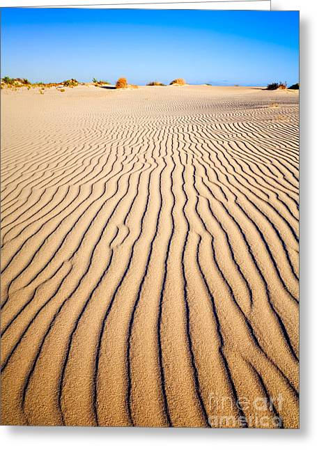 Sand Dunes At Eucla Greeting Card