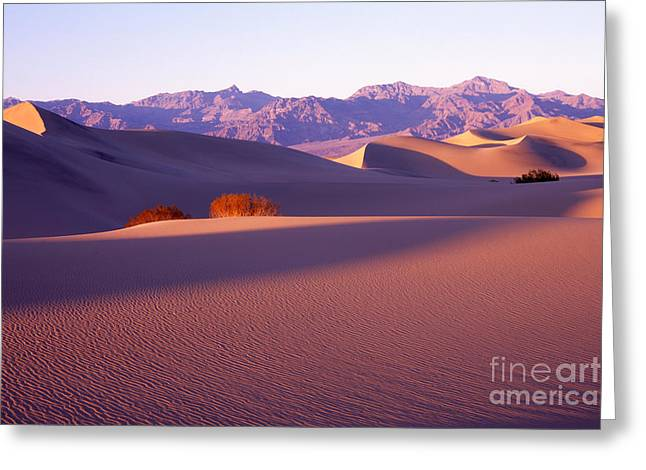 Sand Dunes In Death Valley Greeting Card