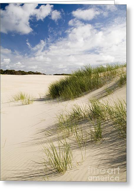 Sand Dunes Greeting Card by Tim Hester