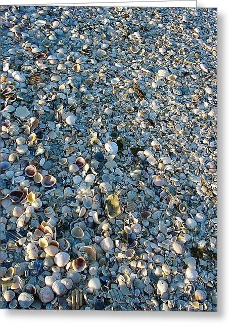 Greeting Card featuring the photograph Sand Key Shells by David Nicholls