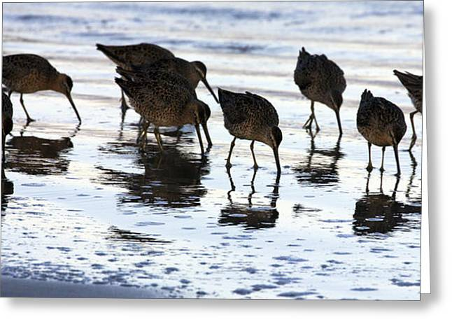 Sand Pipers Reflected Greeting Card