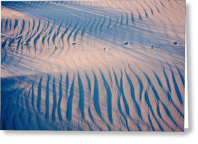Sand Structures Shadows And Bird Traces No2 Greeting Card