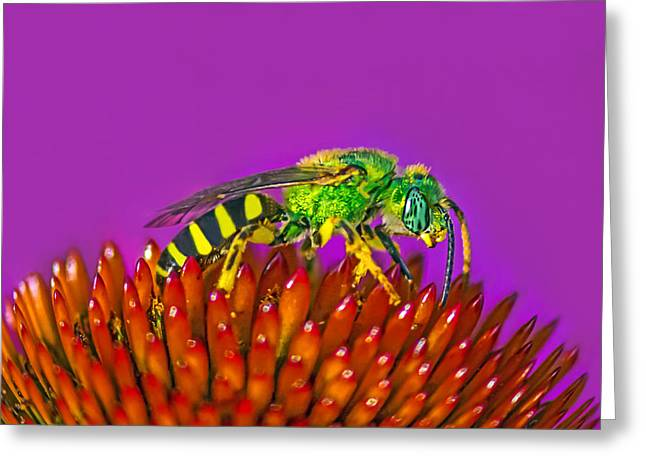 Greeting Card featuring the photograph Sand Wasp by Marion Johnson