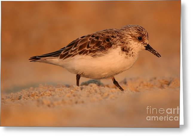 Greeting Card featuring the photograph Sanderling Sunrise by John F Tsumas
