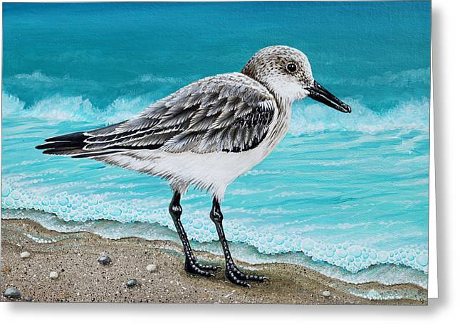 Sanderling Greeting Card