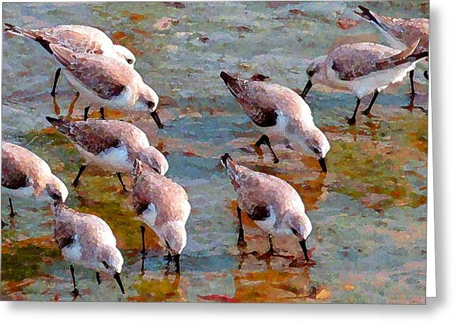 Sanderlings At Alamitos Bay Greeting Card by Timothy Bulone