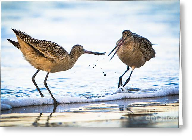 Greeting Card featuring the photograph Sanderlings Playing At The Beach by John Wadleigh