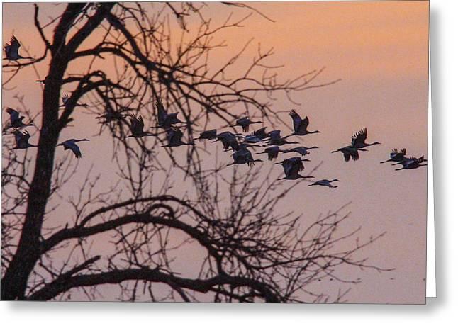Sandhill Crane Across The Sky Greeting Card by Jill Bell