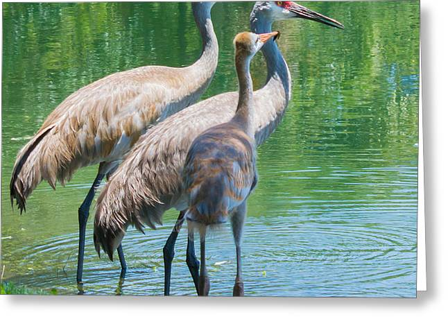Mom Look What I Caught Greeting Card by Susan Molnar