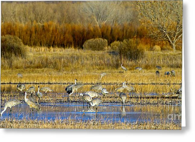 Sandhill Flock In Fall Greeting Card