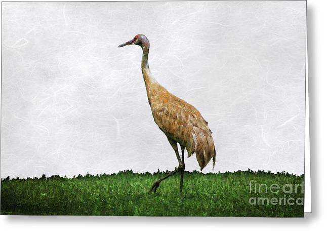 Sandhill Crane Greeting Card by Mary Machare