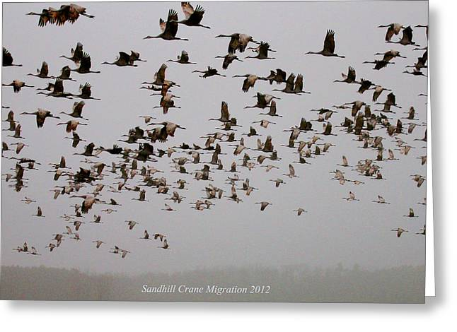 Sandhill Crane Migration Greeting Card